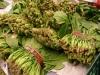 봄철 즐겨먹는 시금치·취나물·시래기 일부서 농약 기준 초과