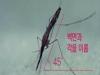 올해 첫 말라리아 감염모기 확인...중국얼룩날개모기 주의